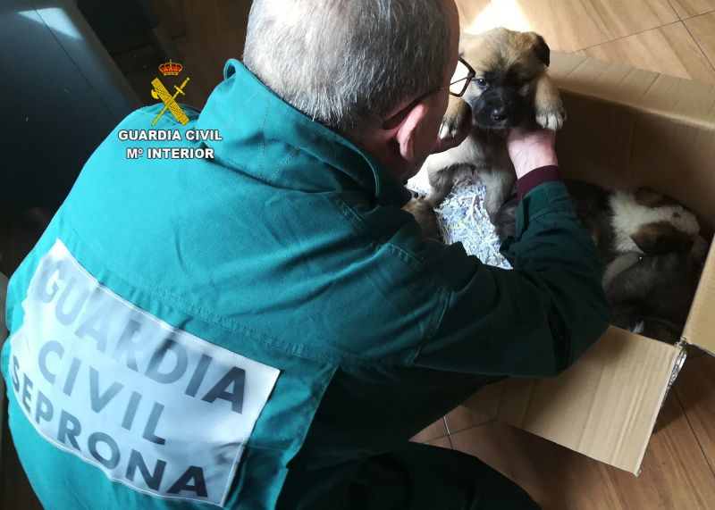 La Guardia Civil salva a cinco cachorros de mastín que se encontraban en terreno de difícil acceso