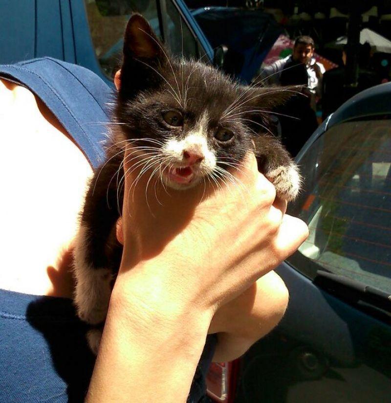Yedra, rescatada por DAZ tras horas de angustia, necesita un hogar, ¿te animas?